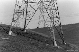 Powerlines, hills, cows