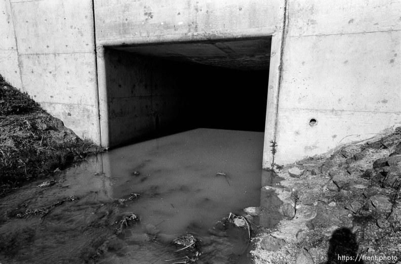 Trent shadow and tunnel in the creek.