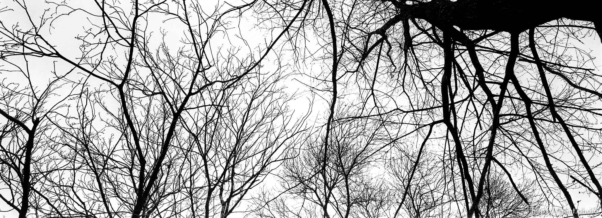 Trees above the crematorium at the Auschwitz Concentration Camp.
