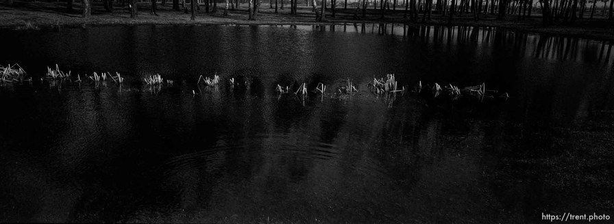 Pool filled with the ashes of the dead at the Birkenau Concentration Camp.