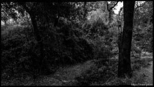 Walking path, trees, in San Ramon.