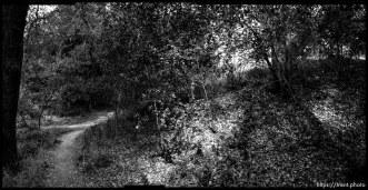 20050913walking path seq bw 3