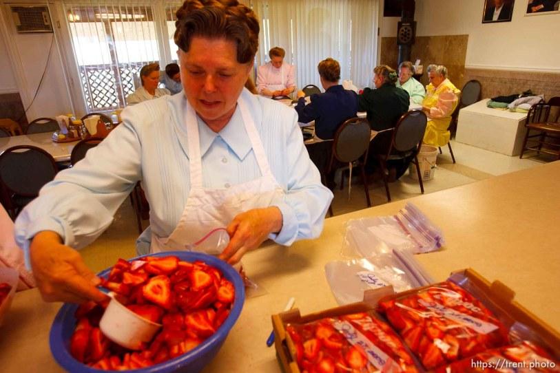 Westcliffe - FLDS women packing strawberries. Monday, July 28, 2008.