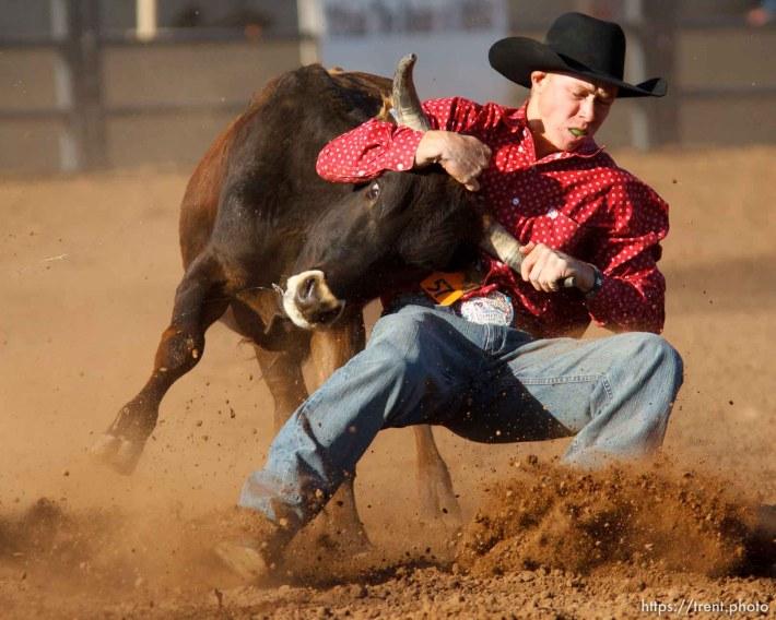 Trent Nelson | The Salt Lake Tribune Chet Boren in the steer wrestling competition at the Utah High School Rodeo Finals Saturday, June 9, 2012 in Heber City, Utah.