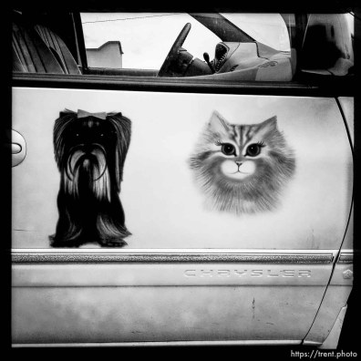 dog and cat on car. south state project.
