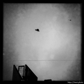 pigeon, helicopter. south state project.