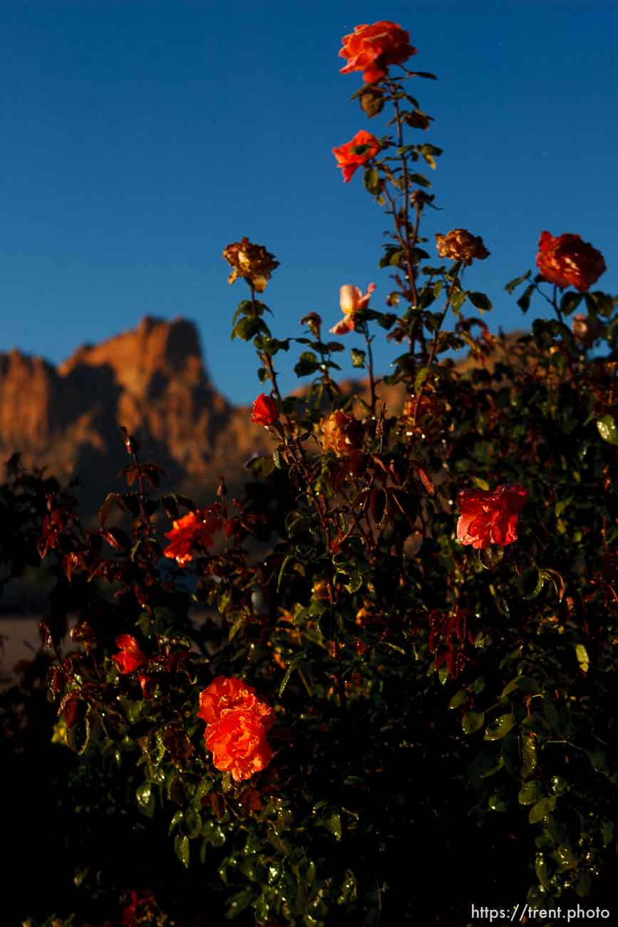 Trent Nelson | The Salt Lake Tribune flowers at bishop's storehouse, in Colorado City, Sunday, October 6, 2013.