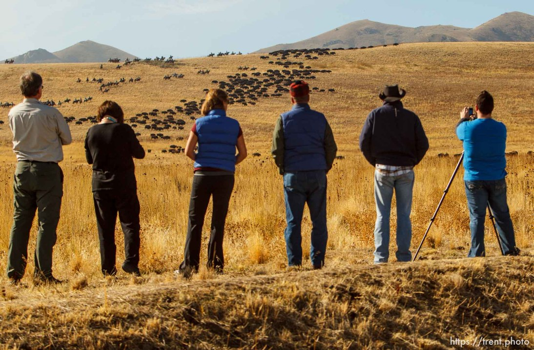 Trent Nelson | The Salt Lake Tribune Onlookers watch riders drive bison at the annual Antelope Island Bison Roundup, Friday October 25, 2013.