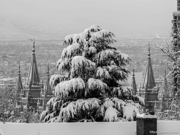 Trent Nelson | The Salt Lake Tribune lds temple, Snowfall in Salt Lake City, Tuesday December 15, 2015.