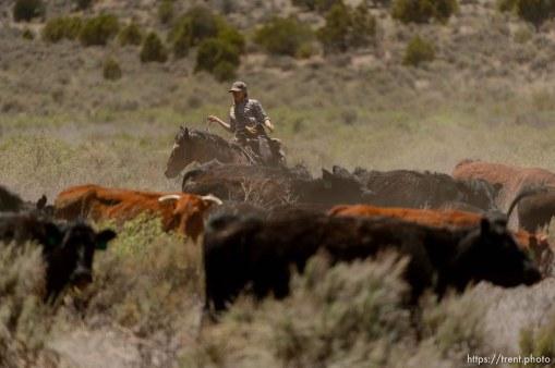 Trent Nelson | The Salt Lake Tribune Tean Finicum, cattle roundup, Saturday May 21, 2016.