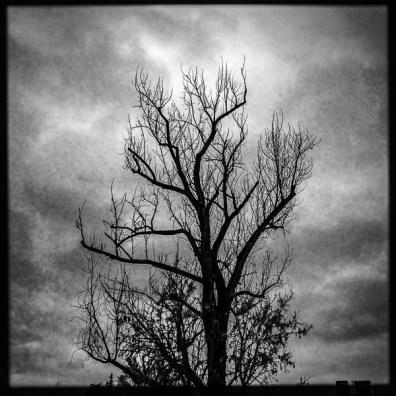 trees, Tuesday January 10, 2017.