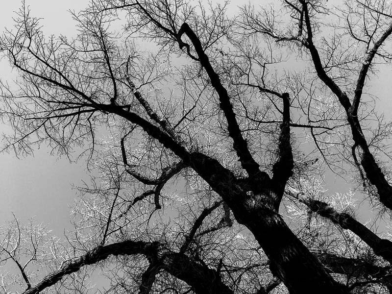trees, liberty park, Wednesday February 8, 2017.