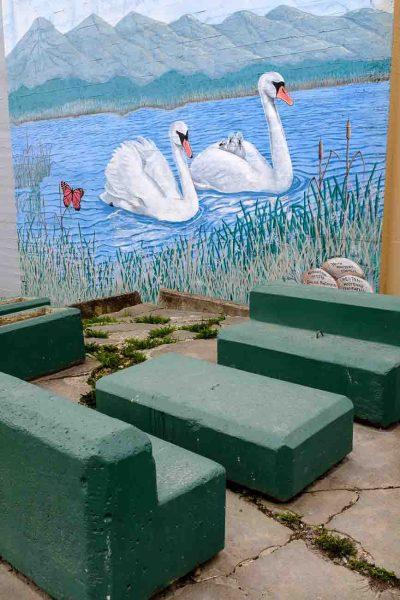 swans and concrete benches, creston, british columbia, Monday April 17, 2017.