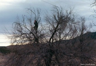 Man in tree waves to the Governor's Centennial Train