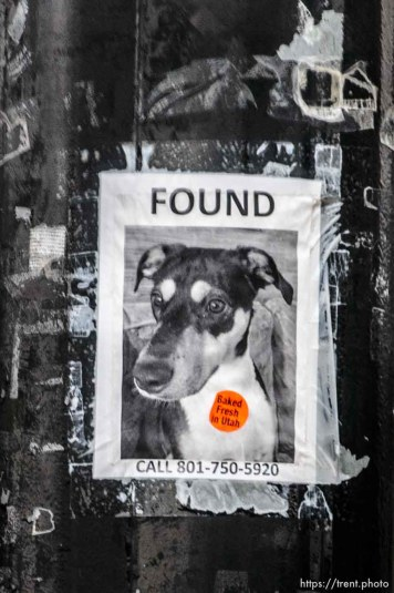 dog found flier with baked fresh in utah sticker, Tuesday January 9, 2018.