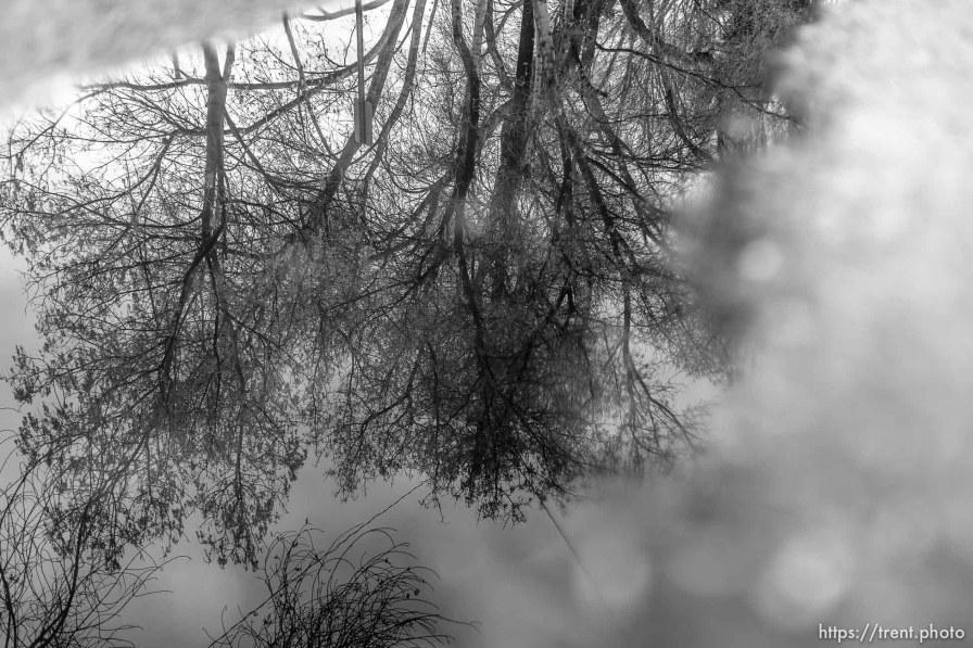 trees, reflection, wet street, Tuesday January 9, 2018.