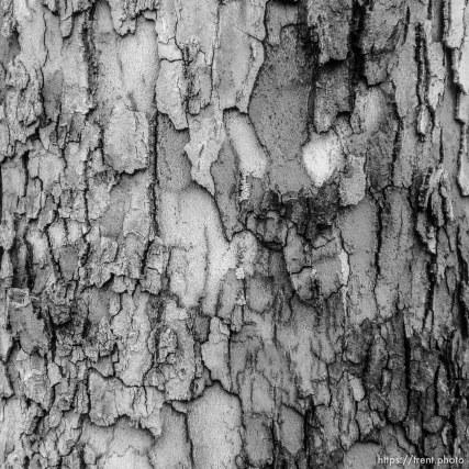 tree detail, Tuesday January 9, 2018.
