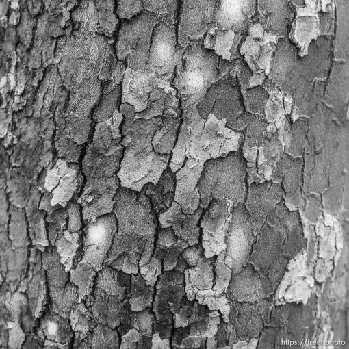 tree detail, Tuesday January 9, 2018.