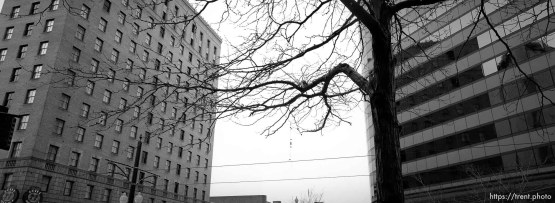Buildings and tree on Main Street.