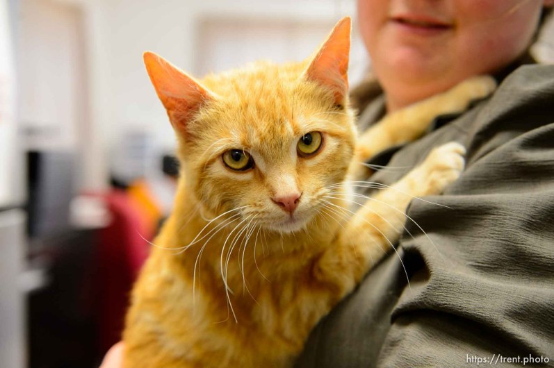 Trent Nelson | The Salt Lake Tribune cat that is being adopted out at 17-year-old flds girl is moving to location where pets not allowed, Monday May 8, 2017.