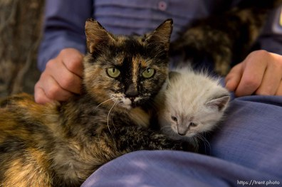 Trent Nelson | The Salt Lake Tribune flds kids with kittens, cats, Tuesday May 23, 2017.