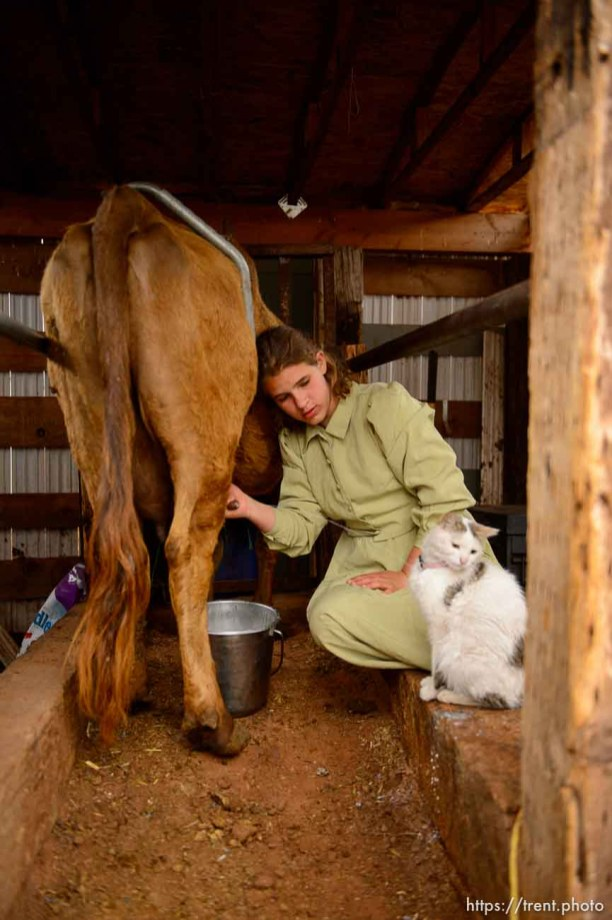 Trent Nelson   The Salt Lake Tribune flds girls milking cow, Tuesday May 9, 2017.