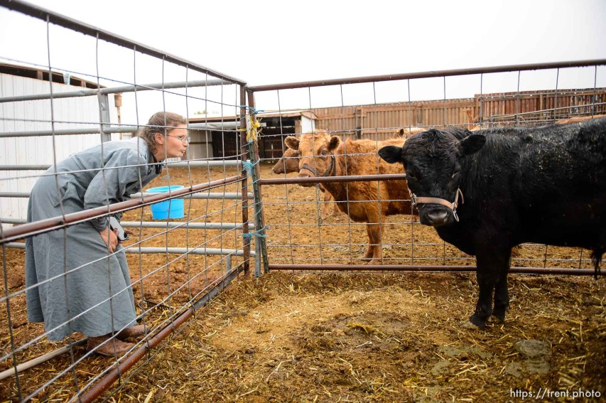 Trent Nelson | The Salt Lake Tribune lori barlow with cows, Tuesday May 9, 2017.