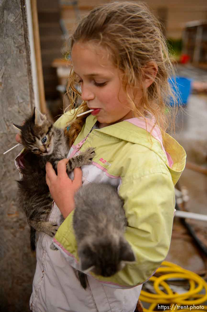 Trent Nelson   The Salt Lake Tribune flds girl with with kittens, Tuesday May 9, 2017. cat