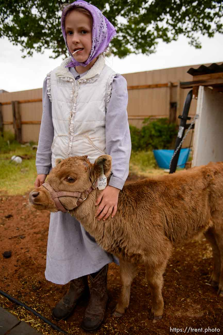 Trent Nelson | The Salt Lake Tribune flds girl with with calf, Tuesday May 9, 2017.