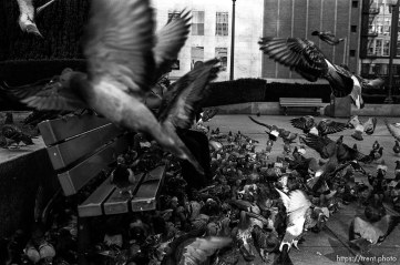 Man feeding pigeons, 1987.