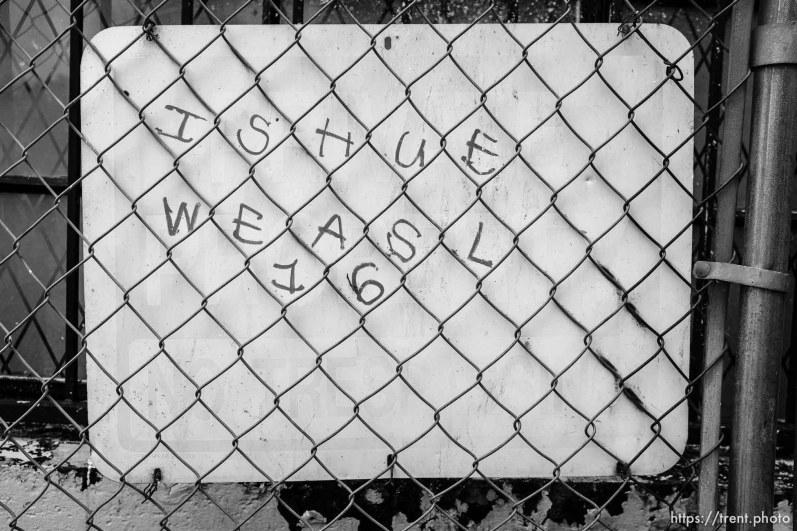 ishue weasl 16, state street, Friday June 14, 2019.