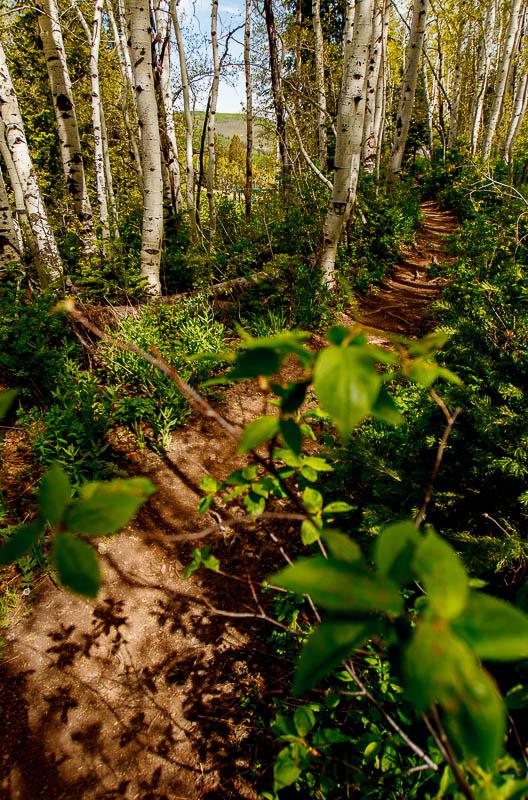 mid-mountain trail