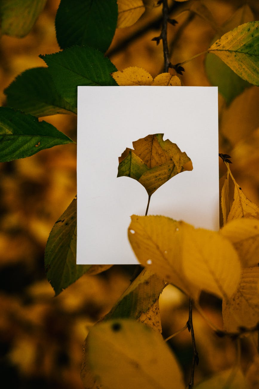paper card in colorful autumn foliage