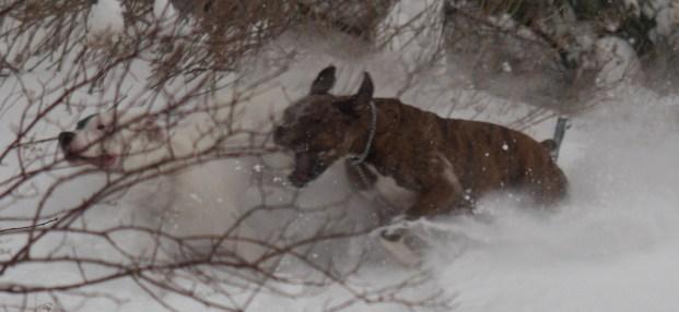 Hight Speed Chase Through Snow