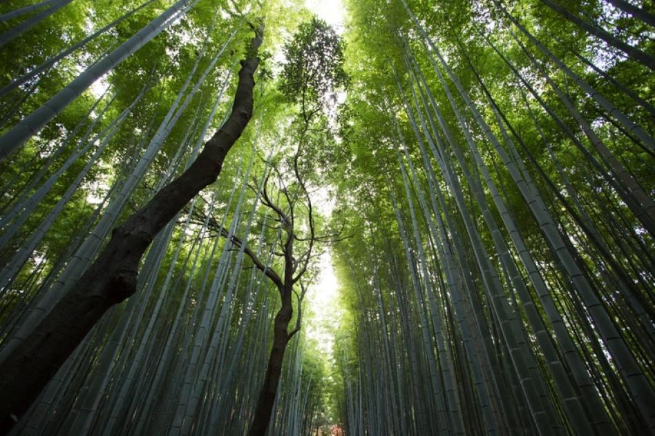 Nel bosco racconto akutagawa ryunosuke