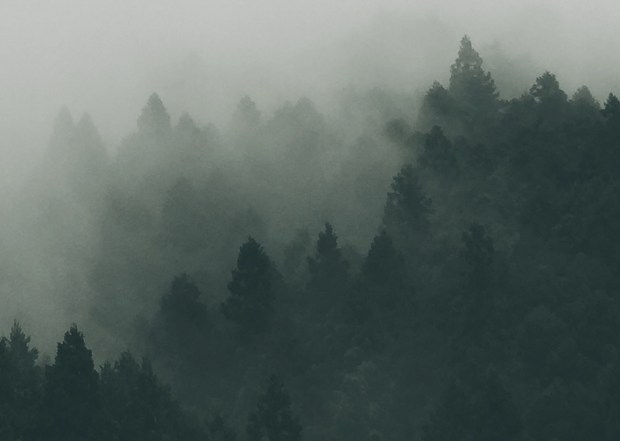 akutagawa nel bosco racconto