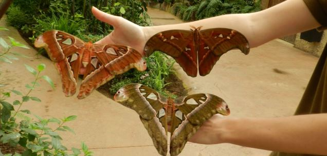mariposariobenalmadena criamariposas - 10 planes con niños para este verano