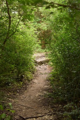 Spicewood Valley Trail