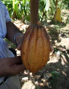 TresHombresReep_cacaoboon