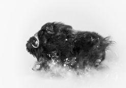 DEEP-SNOW-segundo-categoria-Naturaleza_EDIIMA20181210_0527_19