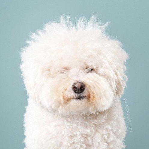 funny-dog-grooming1