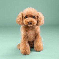 funny-dog-grooming10