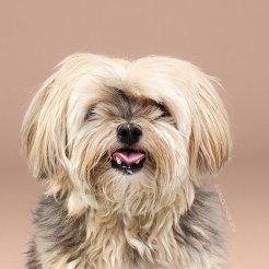 funny-dog-grooming15