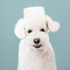 funny-dog-grooming2