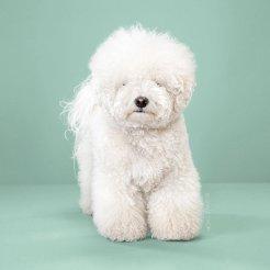 funny-dog-grooming3