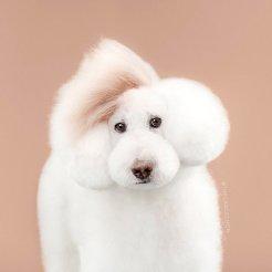 funny-dog-grooming6