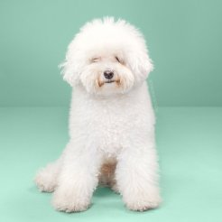 funny-dog-grooming7