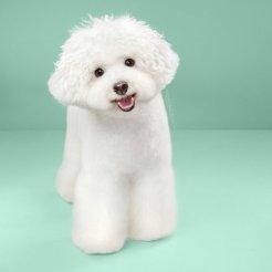 funny-dog-grooming8