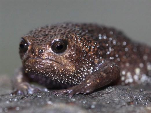 rain-frogs15