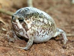 rain-frogs18